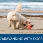 Everything You Need to Caravan with Your Dog