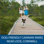 Dog-friendly caravan parks near Looe, Cornwall